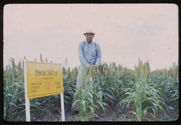 Travis County demonstration field, 1963. Courtesy of Texas A&M AgriLife Extension Service